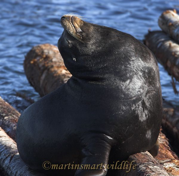 California_Sea-Lion_2568x.jpg