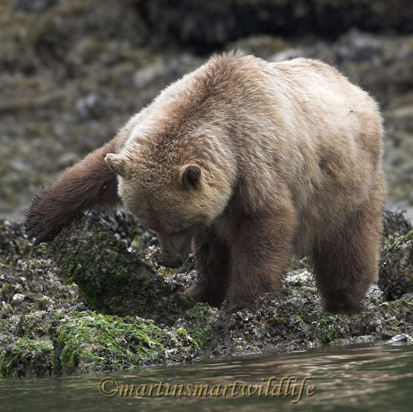 Grizzly_Bear_6687x.jpg