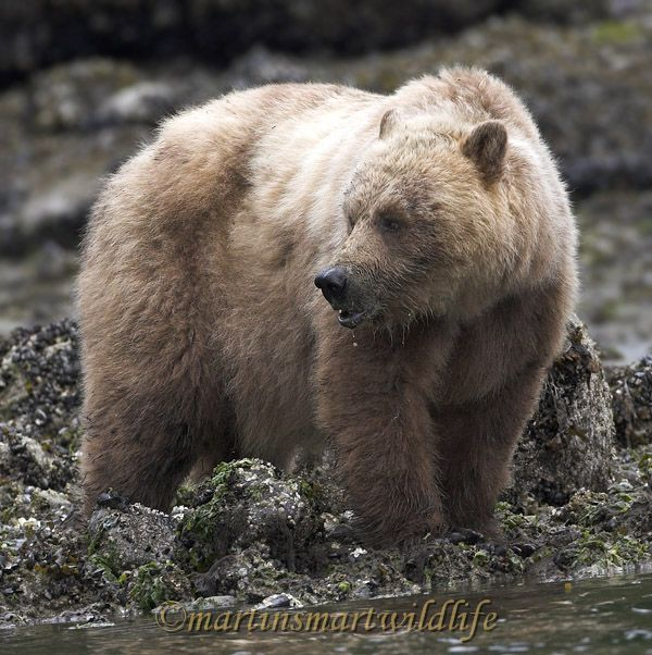 Grizzly_Bear_6708x.jpg