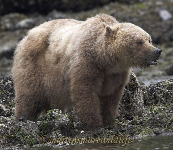 Grizzly_Bear_6711x.jpg