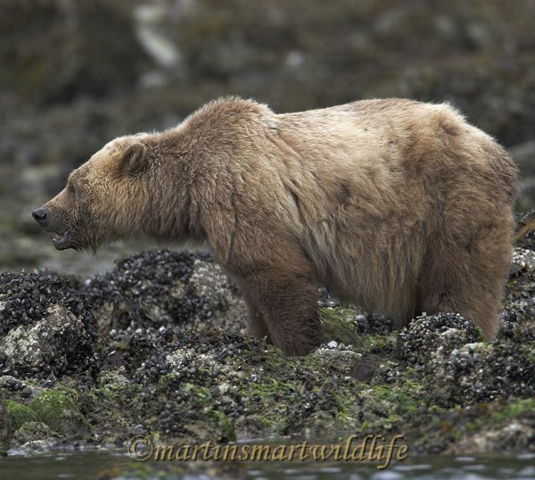 Grizzly_Bear_6719x.jpg