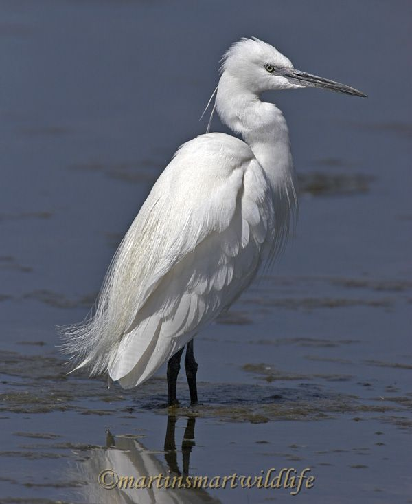 Little_Egret_3728x.jpg